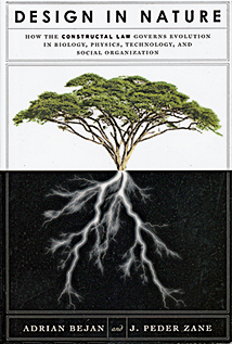 A tree with large branches is shown above ground and below ground the roots are shown in white
