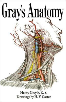 An anatomical drawing of a human focusing on the neck region