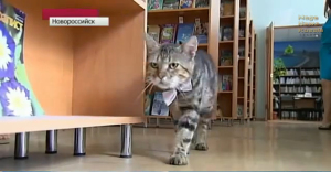 Kuzma, a cat, wears a bow tie and walks through the library