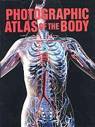 Anatomical illustration of the human body focusing on the torso