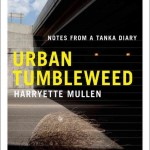 A tumbleweed in an urban setting