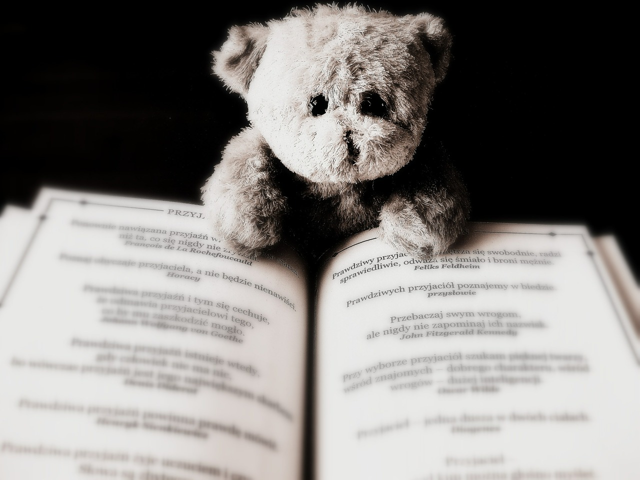 A small teddy bear reading a book.